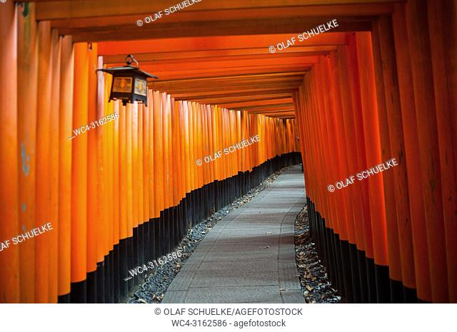 24. 12. 2017, Kyoto, Japan, Asia - An interior view of one of the Torii paths leading to the Fushimi Inari Taisha, a Shinto shrine in Fushimi Ward in Kyoto