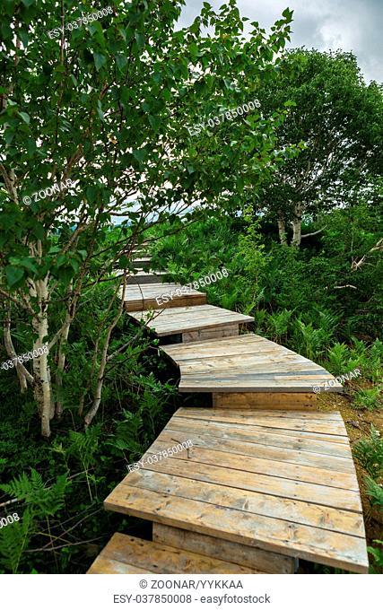 Wooden path in the Uzon Caldera. Kronotsky Nature Reserve