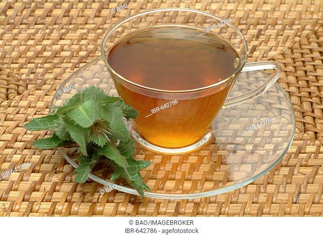 Blessed Thistle (Cnicus benedictus), herb tea