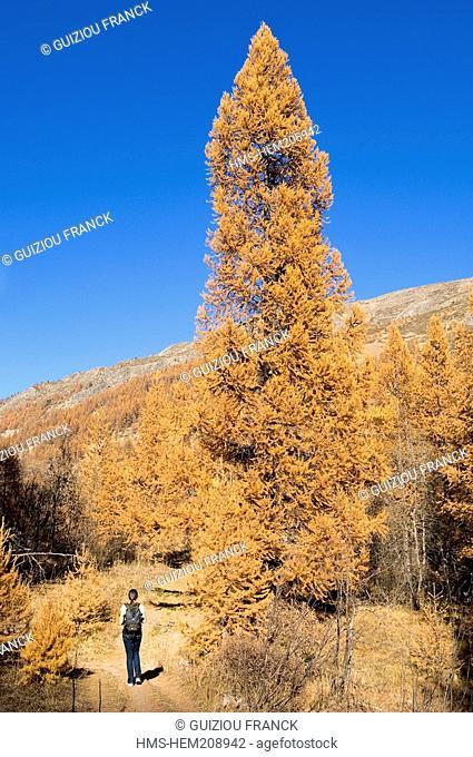 France, Hautes Alpes, the Brianconnais area in autumn, La Claree Valley, hike