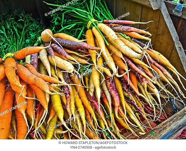 Rainbow carrots at the Copley Square farmer's market. Boston, Massachusetts