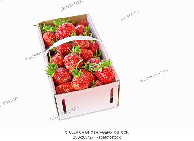 A basket of freshly picked-up strawberries, isolated on white
