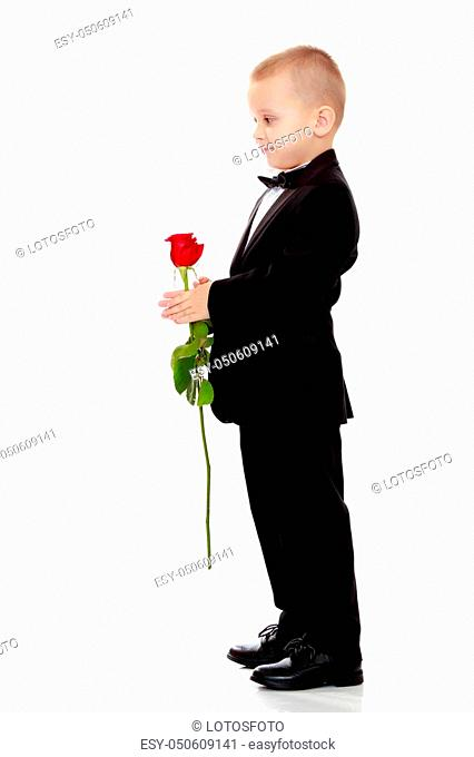 Little boy in black suit with bow tie gives a big red rose charming little girl. Isolated on white background