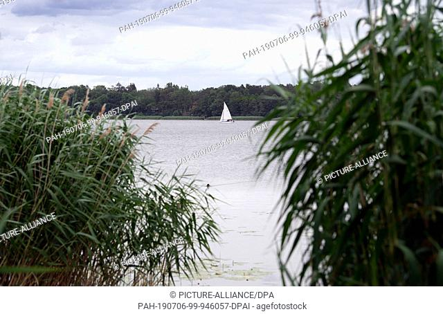 03 July 2019, Brandenburg, Neuruppin: Lake Ruppin in the district of Ostprignitz-Ruppin. The inland waterway is about 14 kilometres long and a popular...