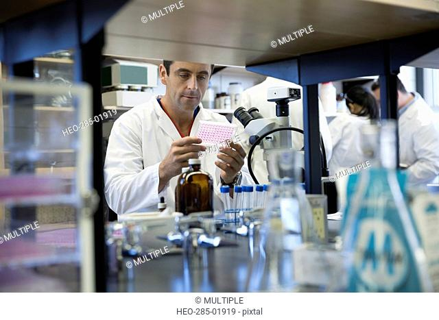 Scientist examining pipette tray at microscope in laboratory