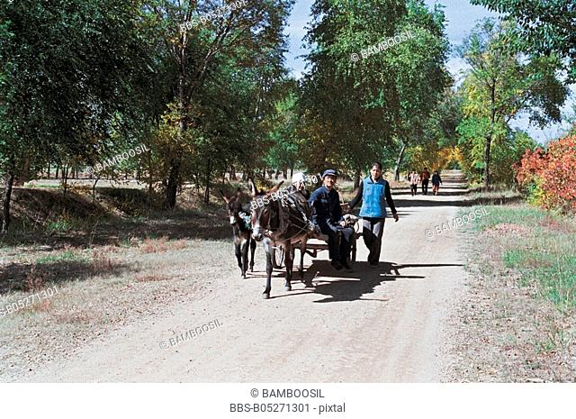 Men traveling in donkey cart, Guyuan County, Hebei Province of People's Republic of China