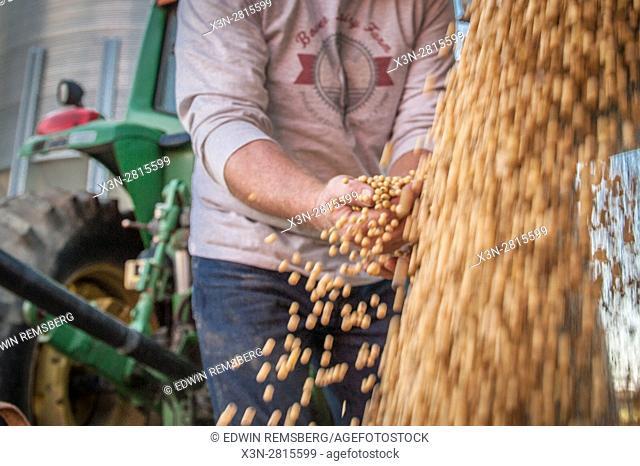 Sifting beans on Pennsylvania farm