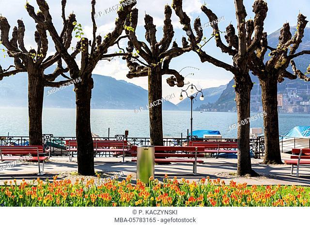 Park bench and trees at the waterside promenade in front of Monte San Salvatore at Lake Lugano, Lago Lugano, Lugano, Ticino, Switzerland, Alps