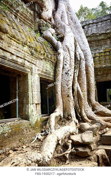 Ta Prohm Temple, Angkor Temples Complex - roots of a giant tree overgrowing ruins of the Ta Prohm, Angkor, Cambodia, Asia