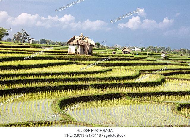 Indonesia, Bali, Ubud, terraced rice fields / Terrassenreisfelder, Ubud, Bali, Indonesien / Spring 2011 / Frühjahr 2011