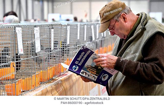 A visitor looks through the catalogue at the 65th German Dove Exhibition of the Association of German Dove breeders in Erfurt, Germany, 25 November 2016