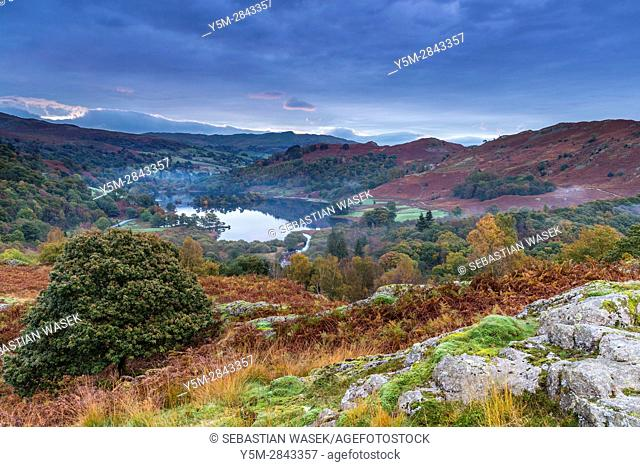 A view over Rydal Water from White Moss Common, Lake District National Park, Cumbria, England, United Kingdom, Europe