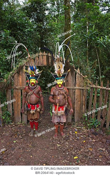 Huli Wigmen at Makara Bird View Lodge, Tari, Papua New Guinea, Oceania
