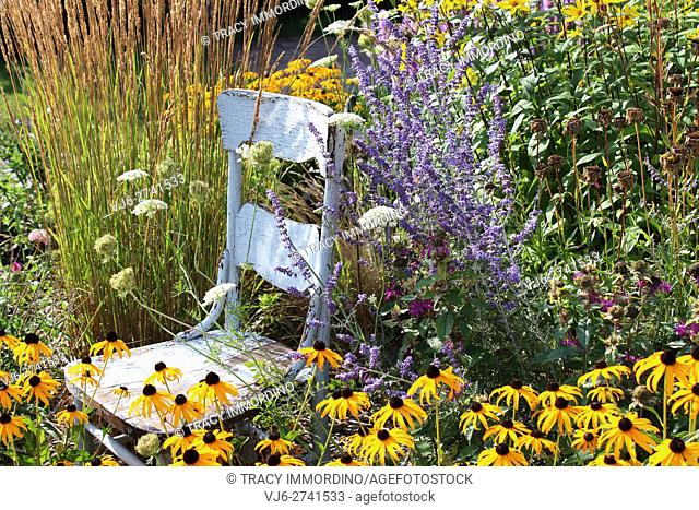 A rustic, blue, wooden chair in a garden surrounded by tall grasses, Black Eyed Susans, Queen Anne's Lace, Lavender, and Bee Balm