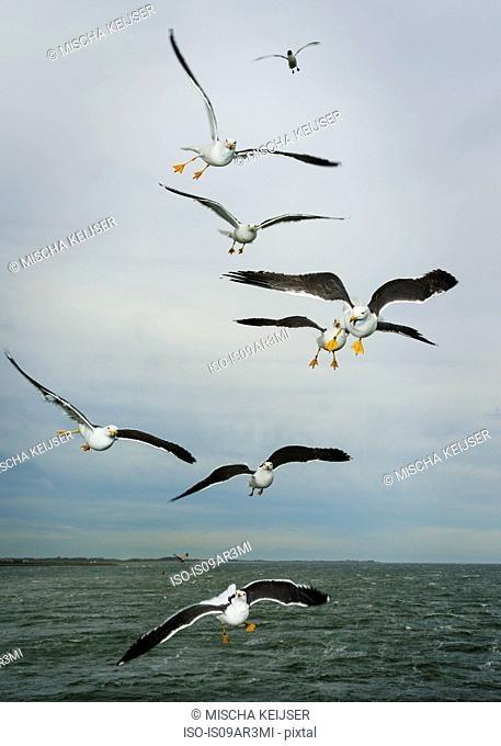 Gulls flying at sea