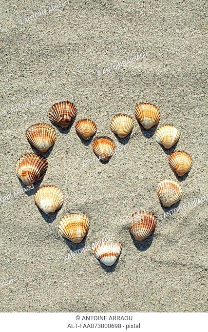 Seashells arranged in heart shape on sand
