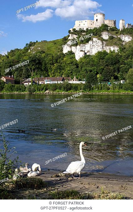 A GOOSE AND HER GOSLINGS ON THE BANKS OF THE SEINE IN FRONT OF THE MEDIEVAL FORTRESS OF CHATEAU GAILLARD BUILT BY THE ENGLISH KING RICHARD THE LIONHEARTED IN...