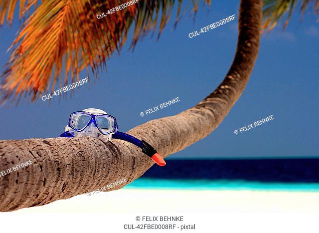 Snorkeling mask on palm tree at beach