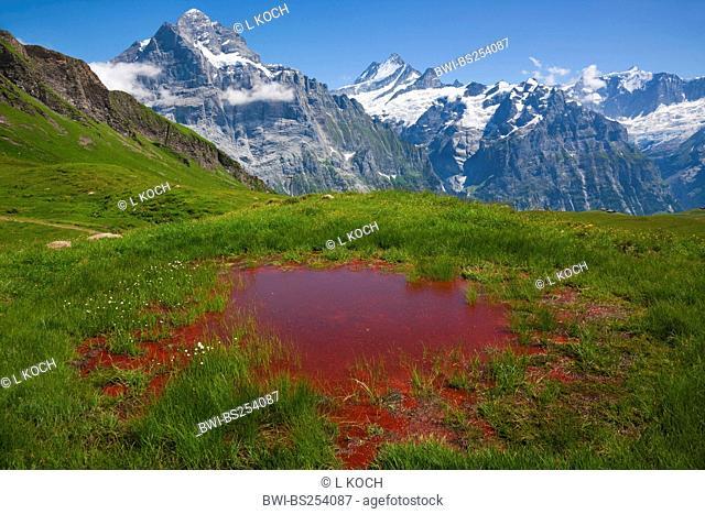 small pond of Murmelital, Wetterhorn in background, Switzerland, Berne, First, Grindelwald