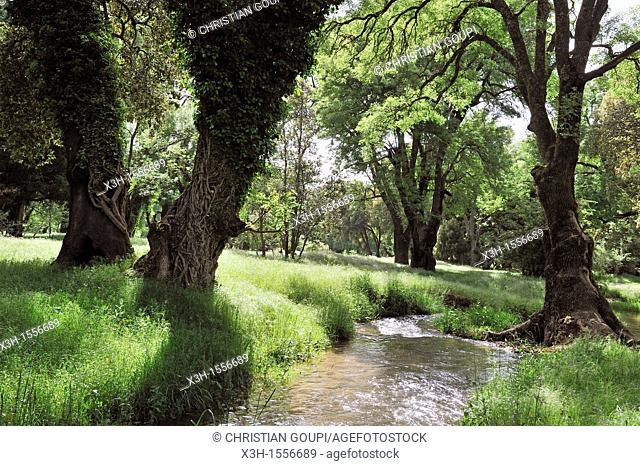river in the forest around Ifrane, Middle Atlas, Morocco, North Africa