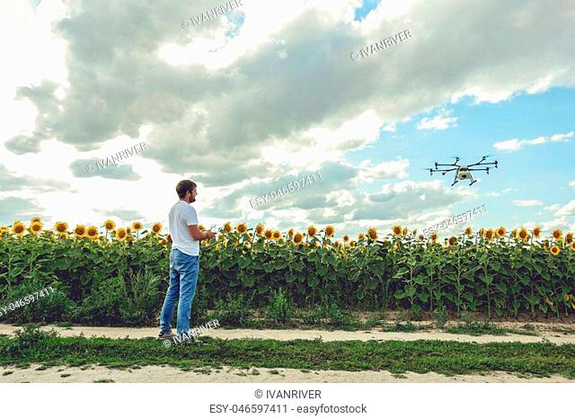 Young man watching and navigating a flying drone in blue clear sky over sunflower field