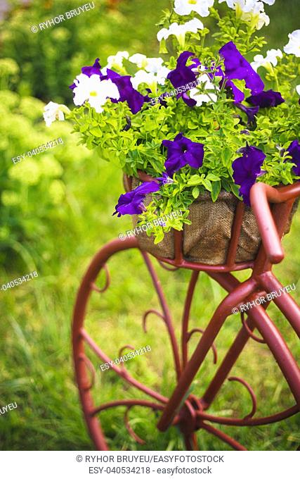 Decorative Model Of An Old Bicycle Equipped With Basket Of Flowers