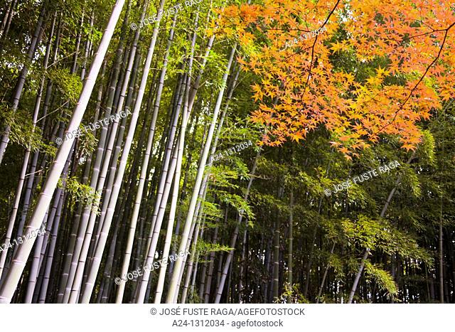 Kamakura City, Bambu Wood