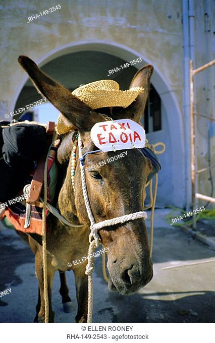 Donkey taxi, Santorini, Cyclades Islands, Greece, Europe