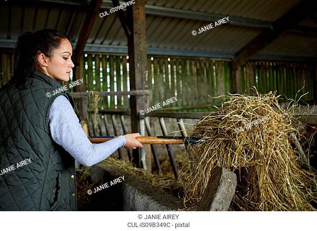 Woman in barn shovelling hay