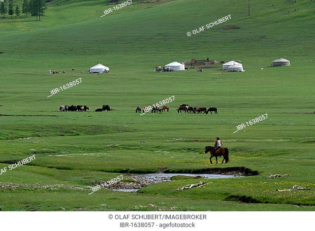 Mongolian child riding on a horse towards a summer camp of the nomads with a yak herd, ger or yurts round tents, in a lush green grass landscape near the...