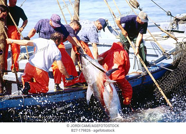 Tuna fishing, Cádiz, Spain