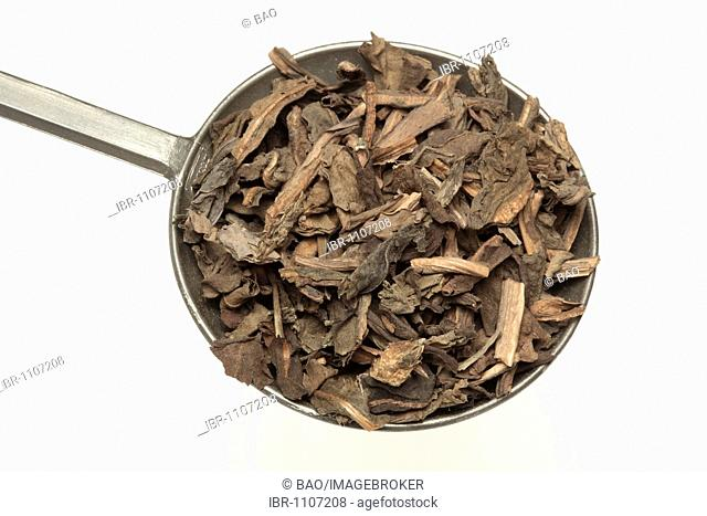 Dried leaves of the medicinal plant Chinese lizard tail, Chameleon plant, fishwort (Houttuynia cordata), Yu Xing Cao