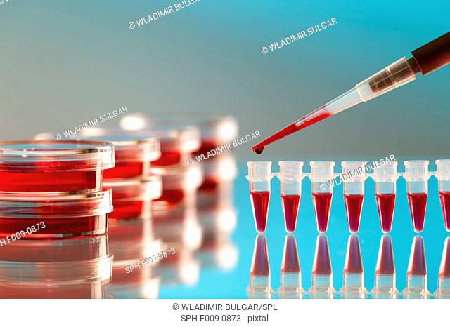 Pipette, petri dishes and microtubes used for blood testing