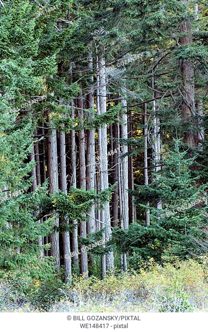 Forest in Rathtrevor Beach Provincial Park - Parksville, Vancouver Island, British Columbia, Canada