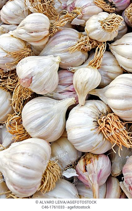 Garlic, Jodhpur  Rajasthan  India