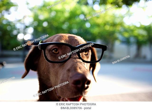 Close up of dog wearing eyeglasses