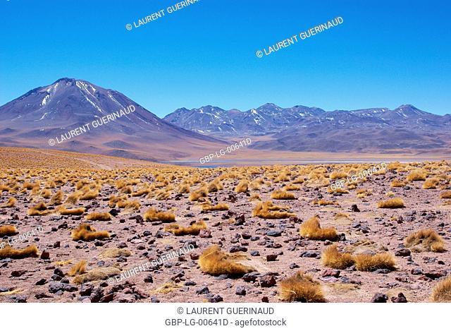 Laguna Miscanti, Los Flamencos Reserve National, Atacama Desert, Region of Antofagasta, Santiago, Chile