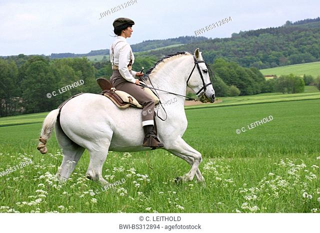 Andalusian horse (Equus przewalskii f. caballus), Doma Vaquera