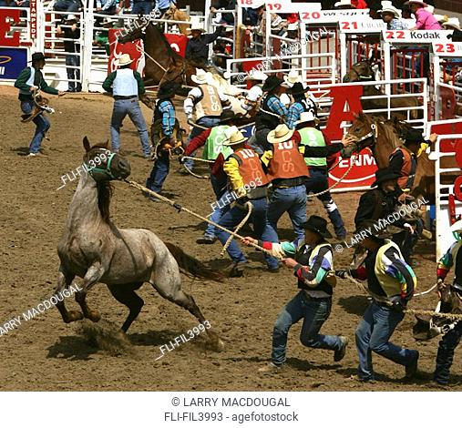 The Wild Horse Race, Calgary Stampede, Calgary, Alberta