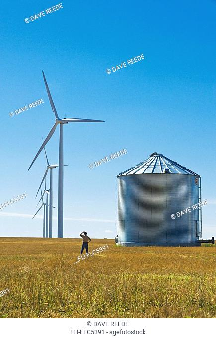 a man looks out over wind turbines and grain bin from a grain stubble field, near St. Leon, Manitoba, Canada