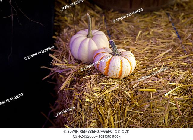 Two small decorative pumpkins on a bale of straw in Baltimore, Maryland, USA