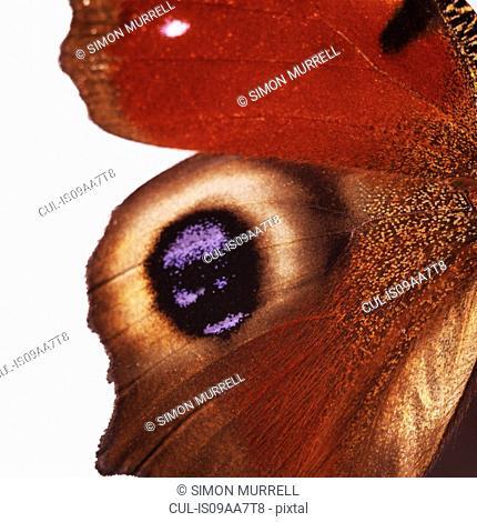 Eye-like markings on butterfly