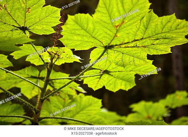 Sunlight illuminates leaves in a forest