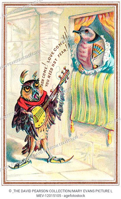 Musical owl with banjo serenading a dove on a comic romantic card