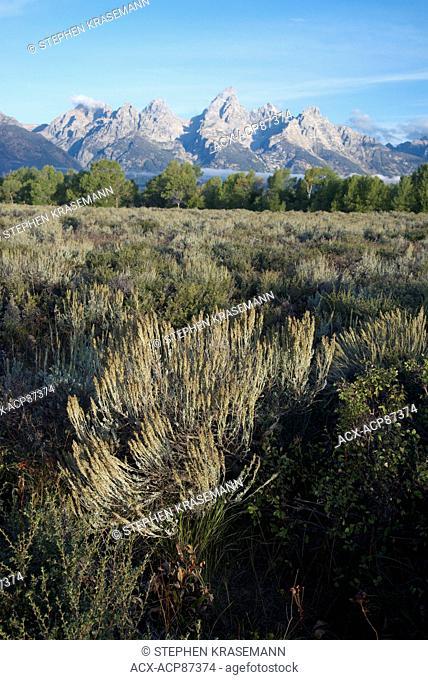 Scenic of Teton Mountain Range in Grand Teton National Park, Jackson, Wyoming, North America. Silvery-green plant is Big Sagebrush