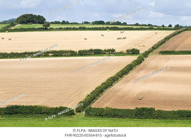 View of fields with hedges and recently cultivated arable fields, Dorset, England, september