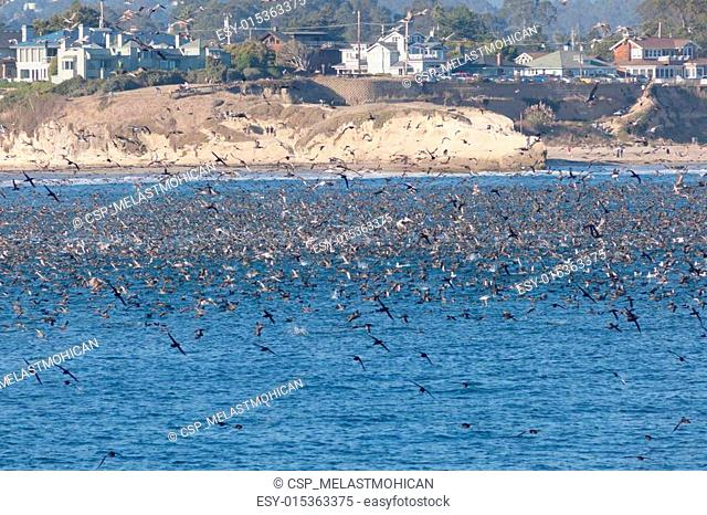 Thousands of birds feeding on