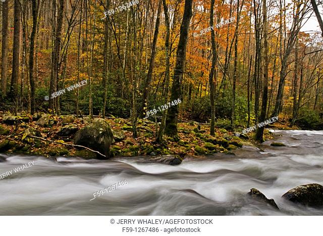 River, Oconaluftee area, Great Smoky Mtns National Park, NC