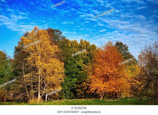 The bright autumn wood