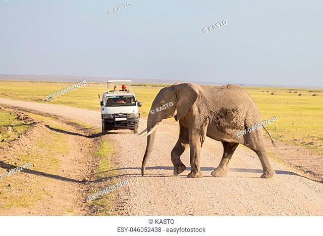 Elephantt crossing dirt roadi in Amboseli, Kenya